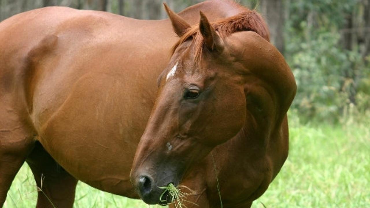 Equiculture horses and fibre