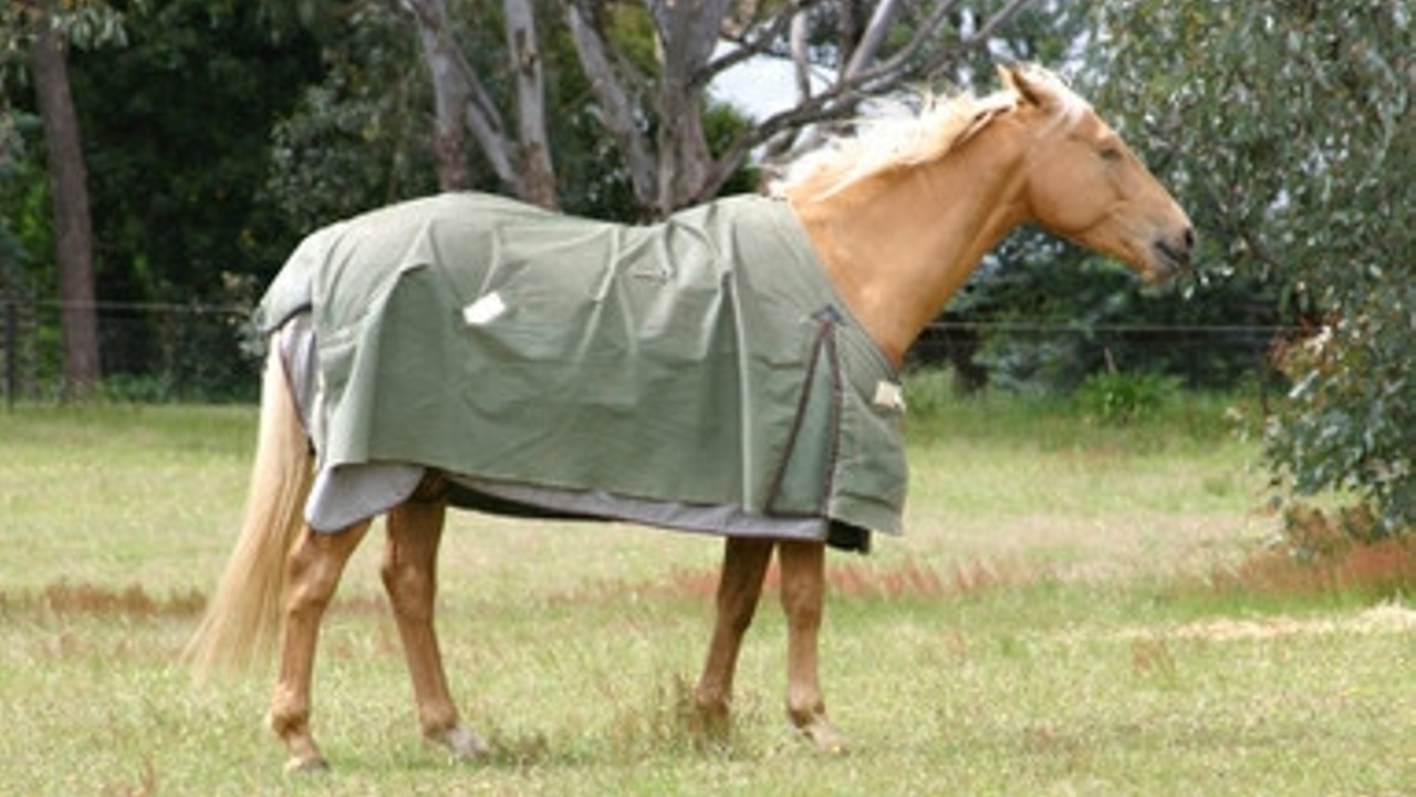 Equiculture horse wearing rug
