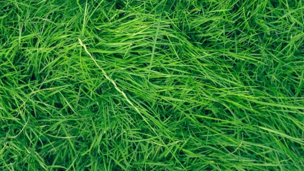 5 Beautiful Southern California Drought Tolerant Grasses,Minimalist House Interior Design Philippines