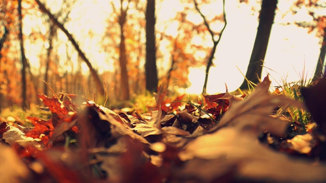 A8sa94hrdsw3boslwmts fall leaves