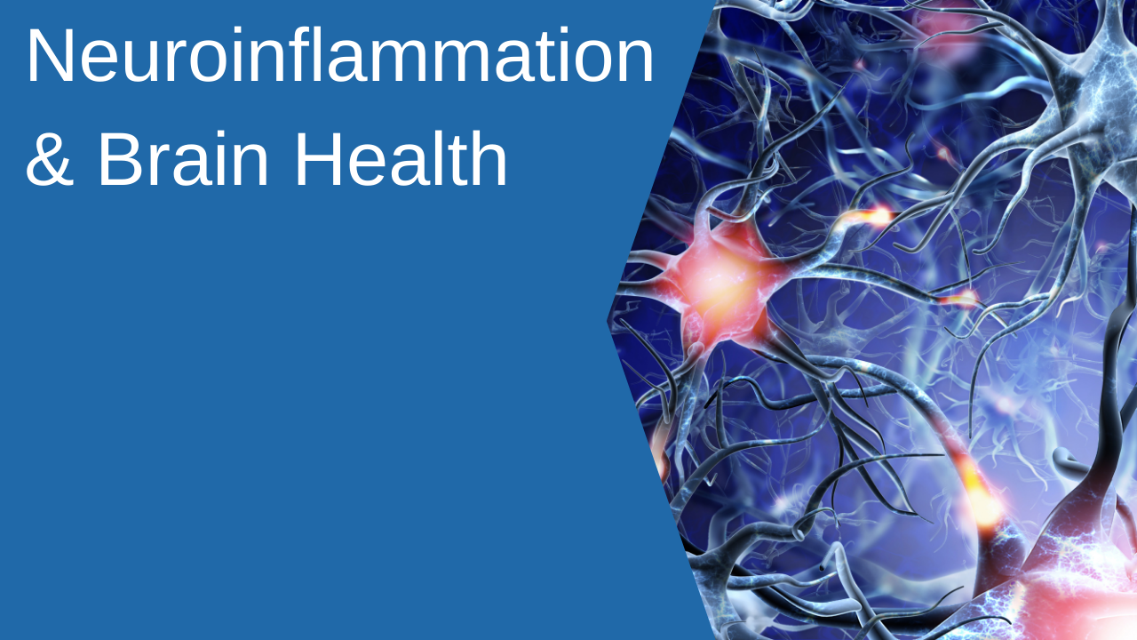 B2h3hpfbtsol0rrdhbkm neuroinflammation brain health