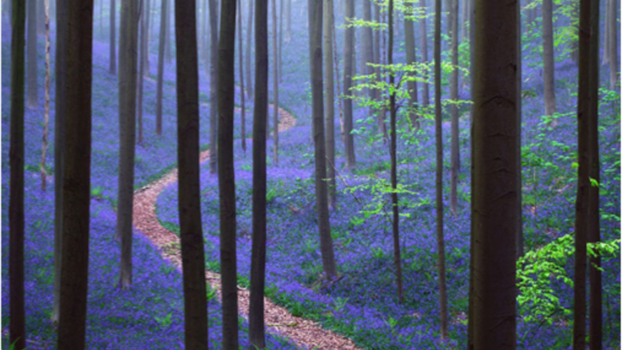 Jxcvq3zlr9enpajikhvu purple path through trees