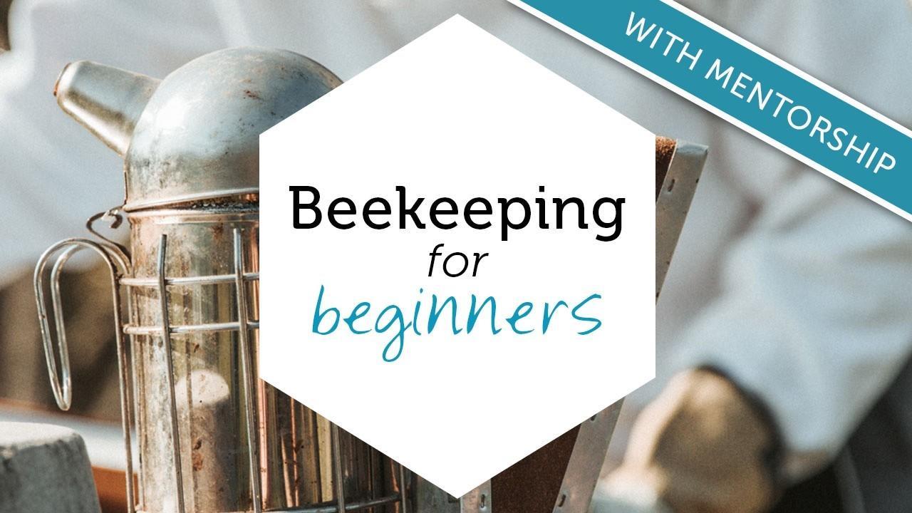 C7bmps3tqvcmcrgn0dqv beekeepingforbeginners productyimagementorship