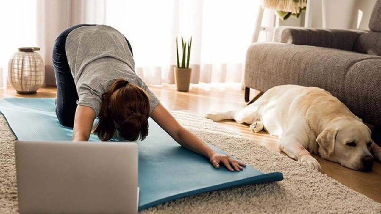 Tigdr6vlrzq609rn0ooq dog yoga