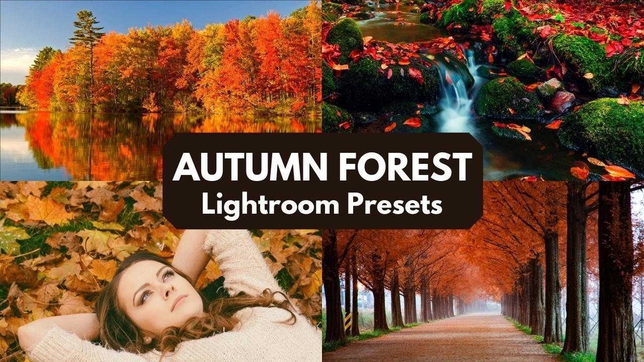 Mgkrvflosjyehsj5tlfm autumn forest presets lightroom