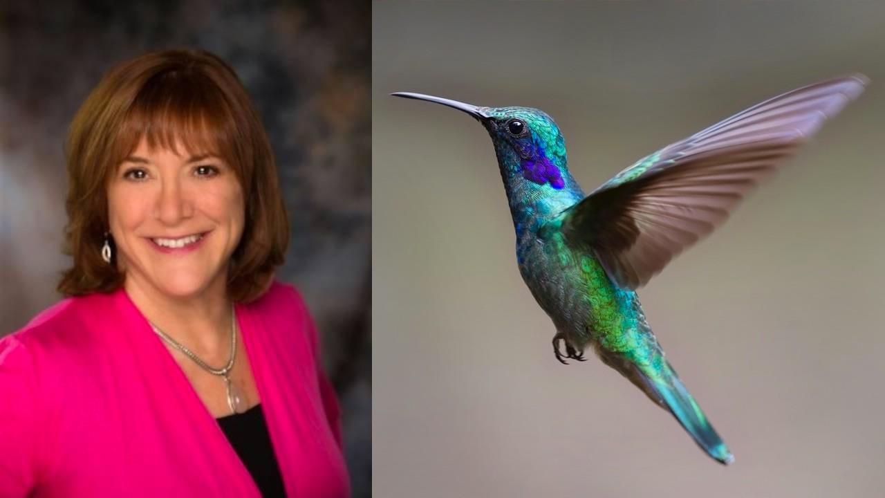 32d6smhstguvytjqio90 robin hummingbird