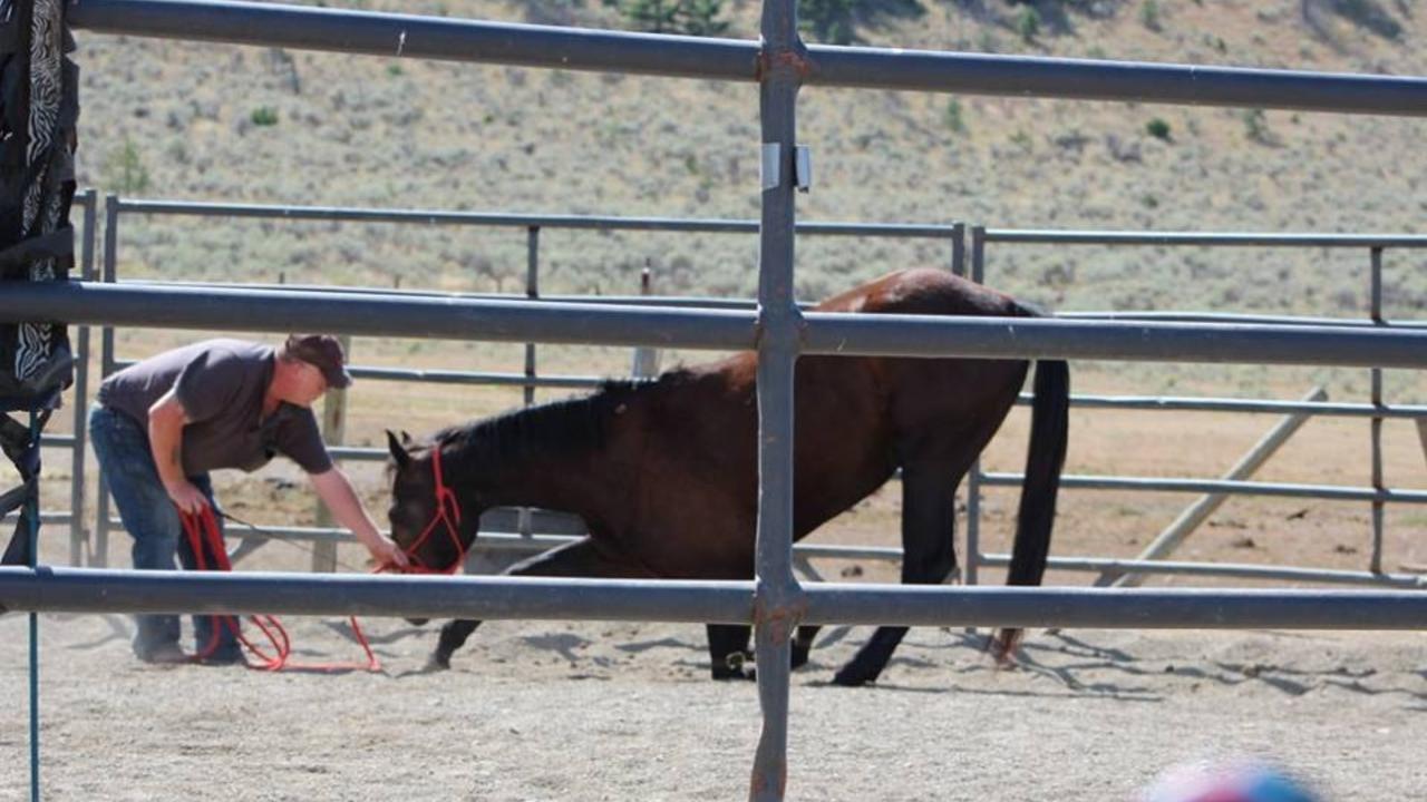 Gxm17hpbtpcehq0p1bjq course 2  horse bowing
