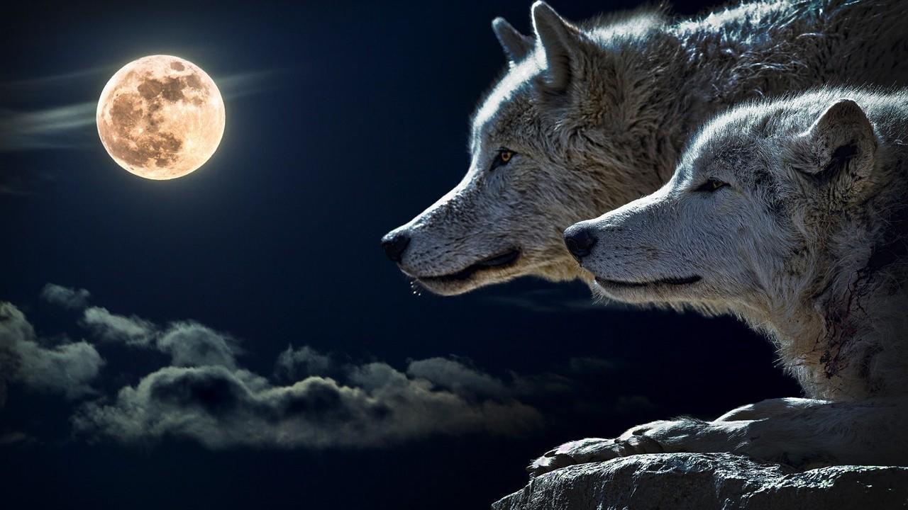 J6qtbddkre6xlf5tx79n 2 wolves  full moon