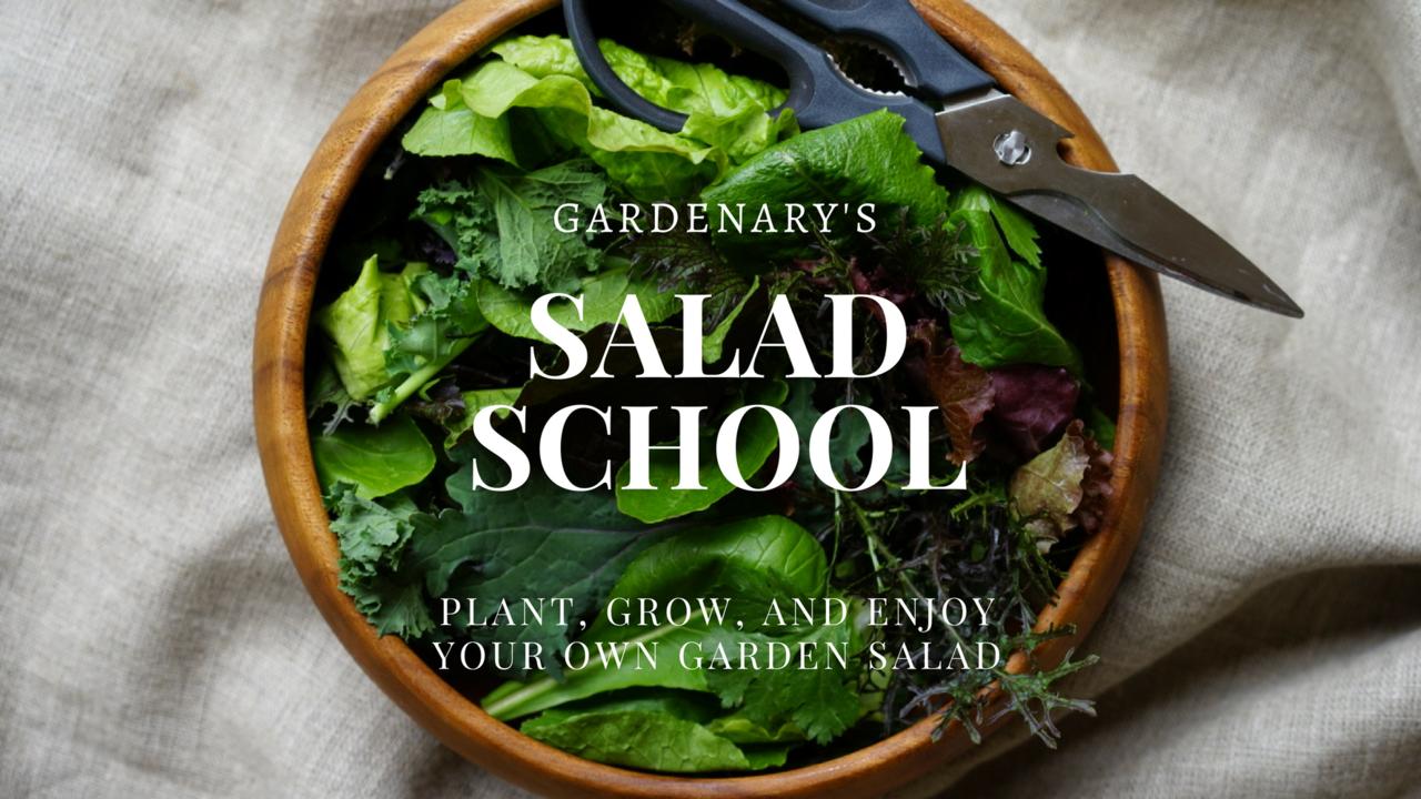 Mtlfcir6q2ifn9l6ikuz salad school title
