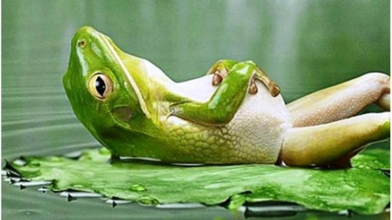 Lfetg7r9re7uw5nrvhgx relax rana