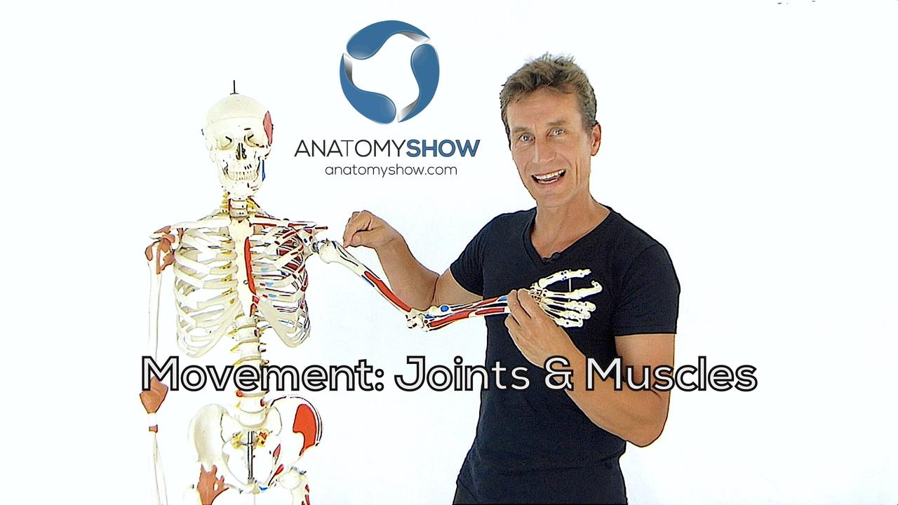 Dzr1qhzms6jiecthdrnq muscle joints product pic