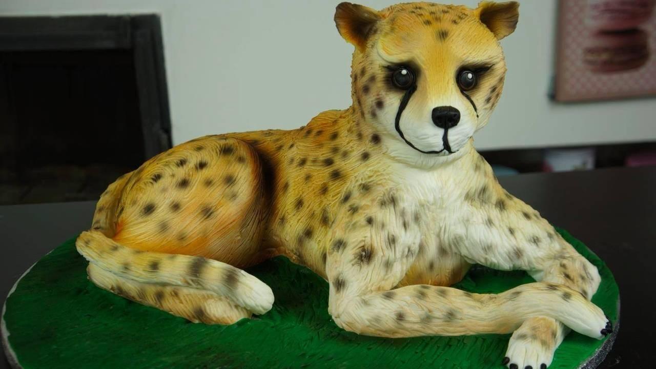 Zj215pv0sdsnssyjwfba cheetahcake
