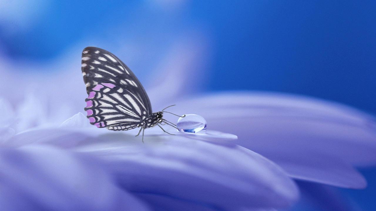 Mhpbglrlt4amw7cu9mte butterfly 3054736 1280x720