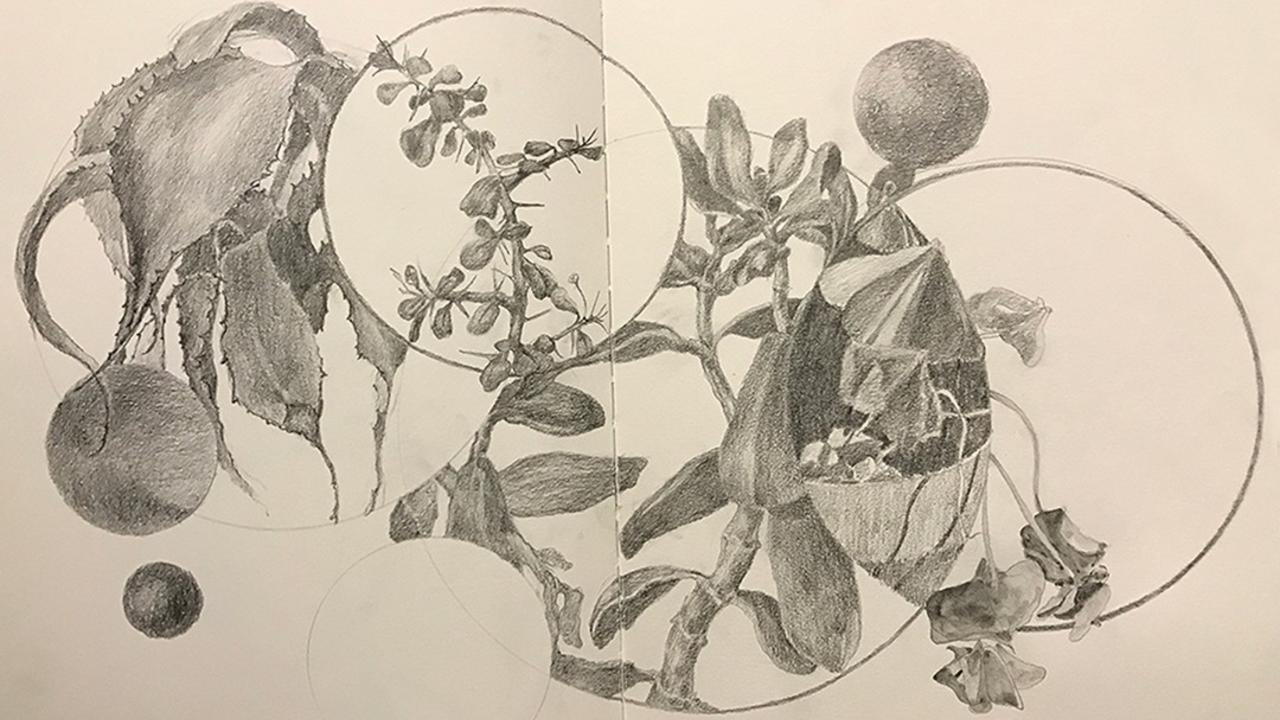 G0hycmfertwywtepcp0v cactus jade oxalis graphite dala art chris carter artist 102418 1080