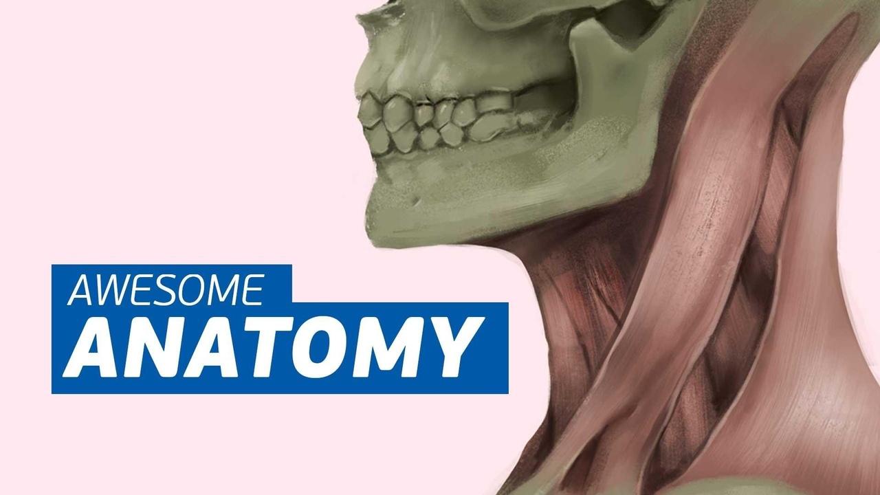 Og1stetys6gjzyowuvkk anatomy