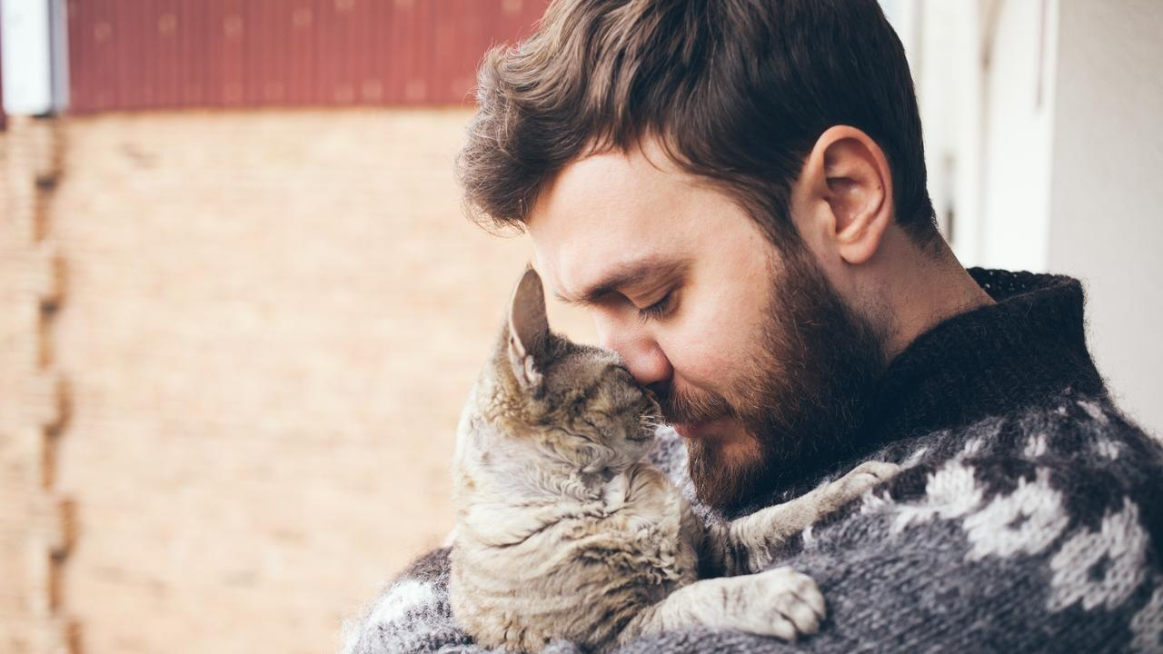 Etysj7tttuqpqpblbpx7 guy and cat