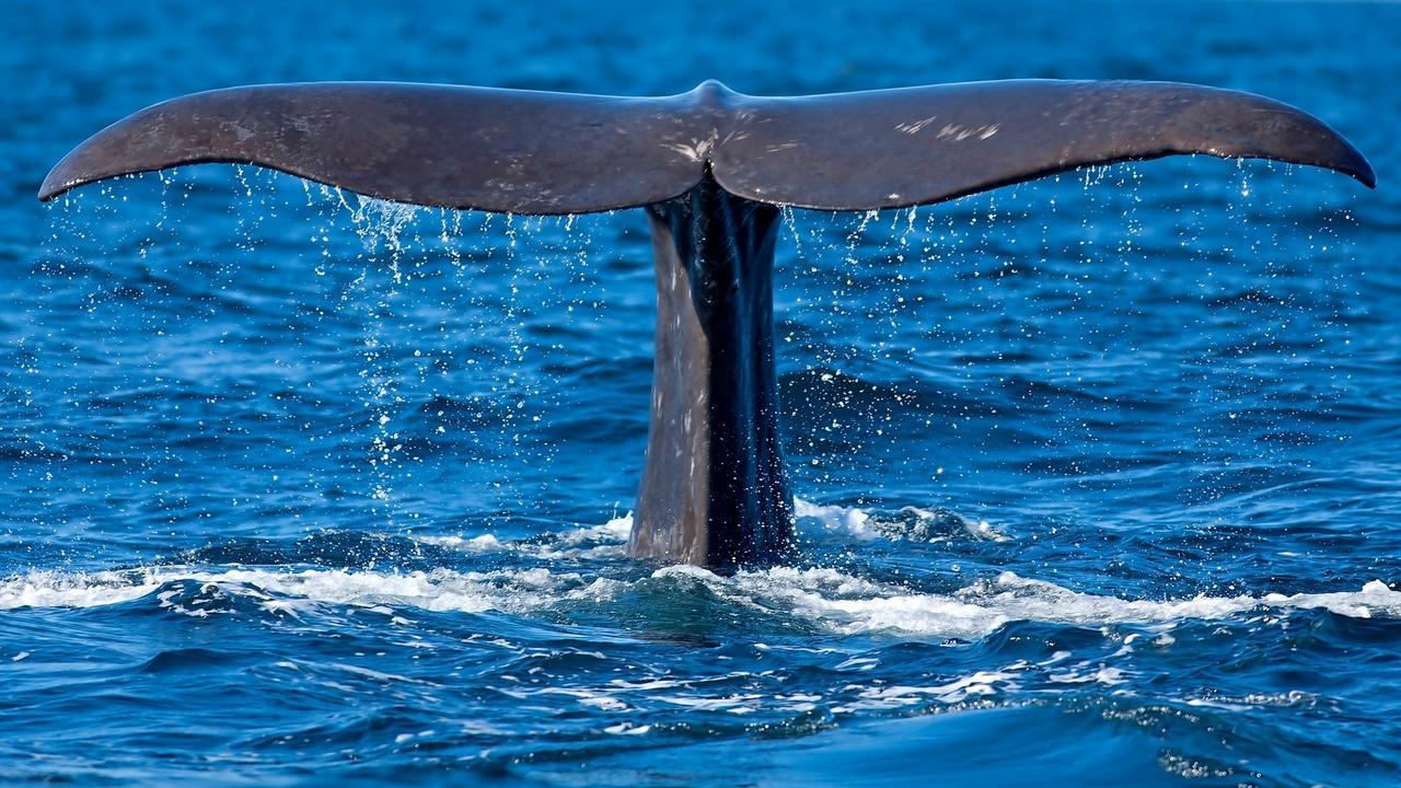 Yecegsgnt4ofvqnppbjo whaletail dp