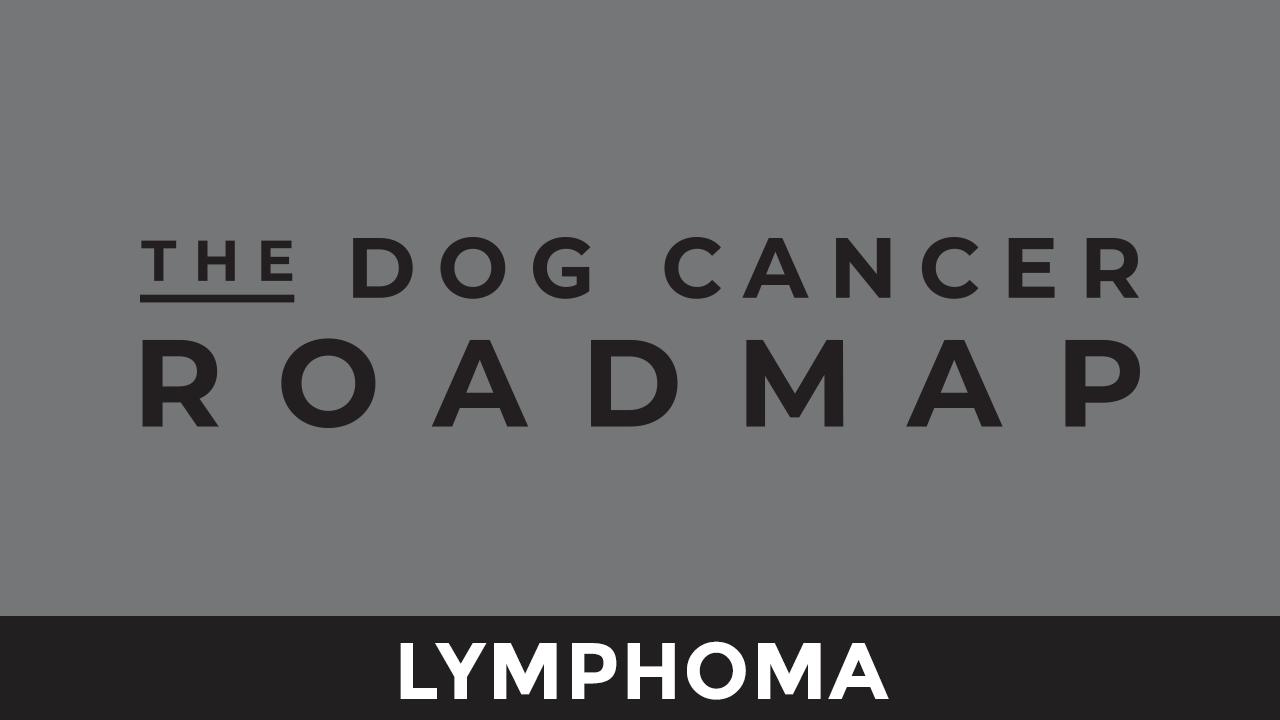 X5j8h0nrqnskaimkergo lymphoma