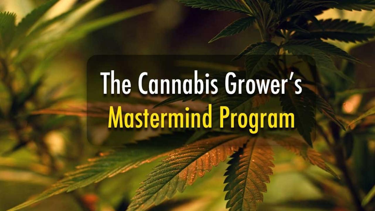 2vmrwt9jqomhk8tjcdis cannabismastermind