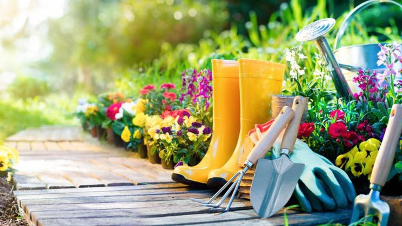 Plurvazqraehyfy2qbza gardening 1521662873