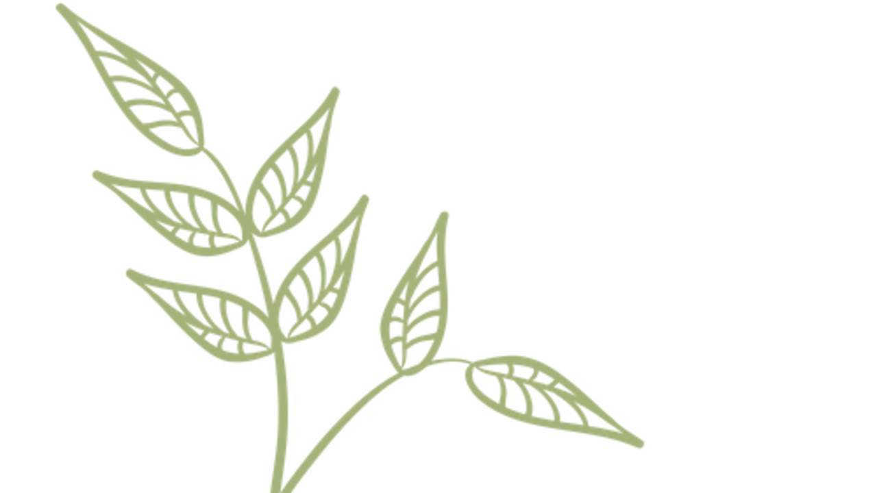 4pextjowtzgi11nndx35 logo leaf