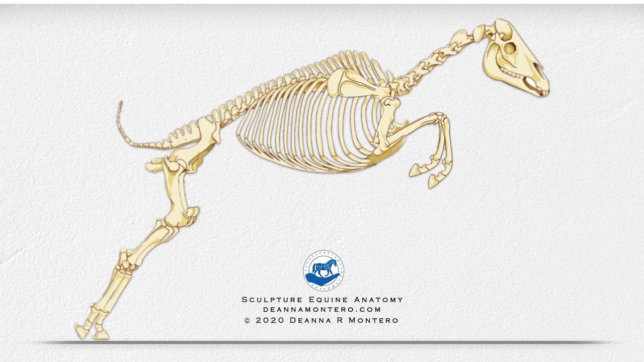 N3pzhhcst0q42g5dzk7u skeleton in motion 1