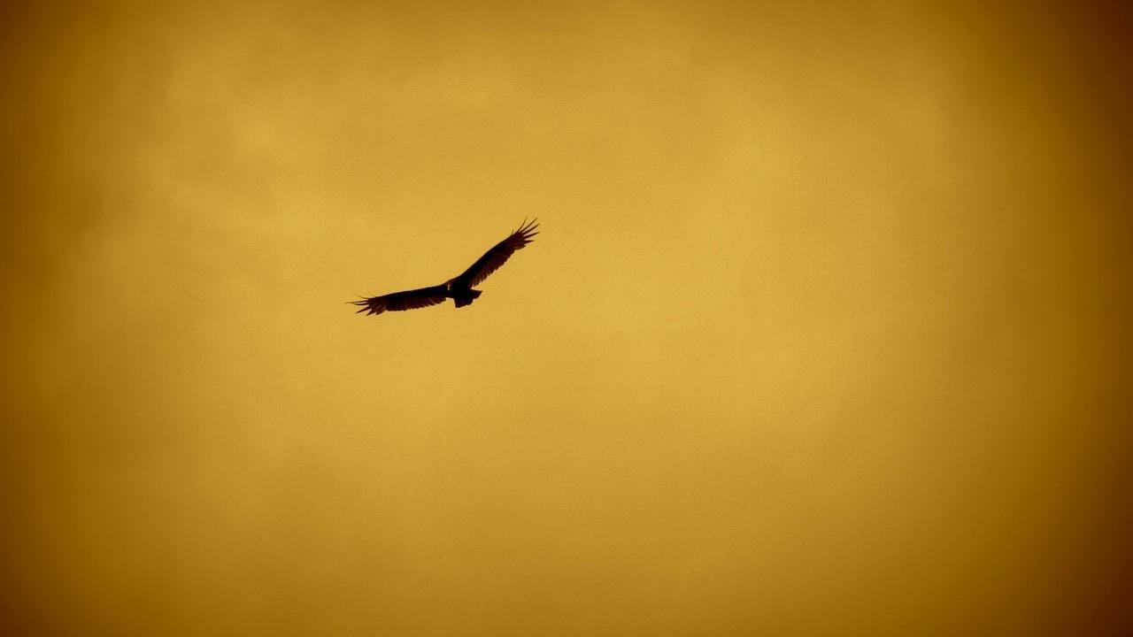 Wt3zgpciqtyzb9mzhpjn free as a bird