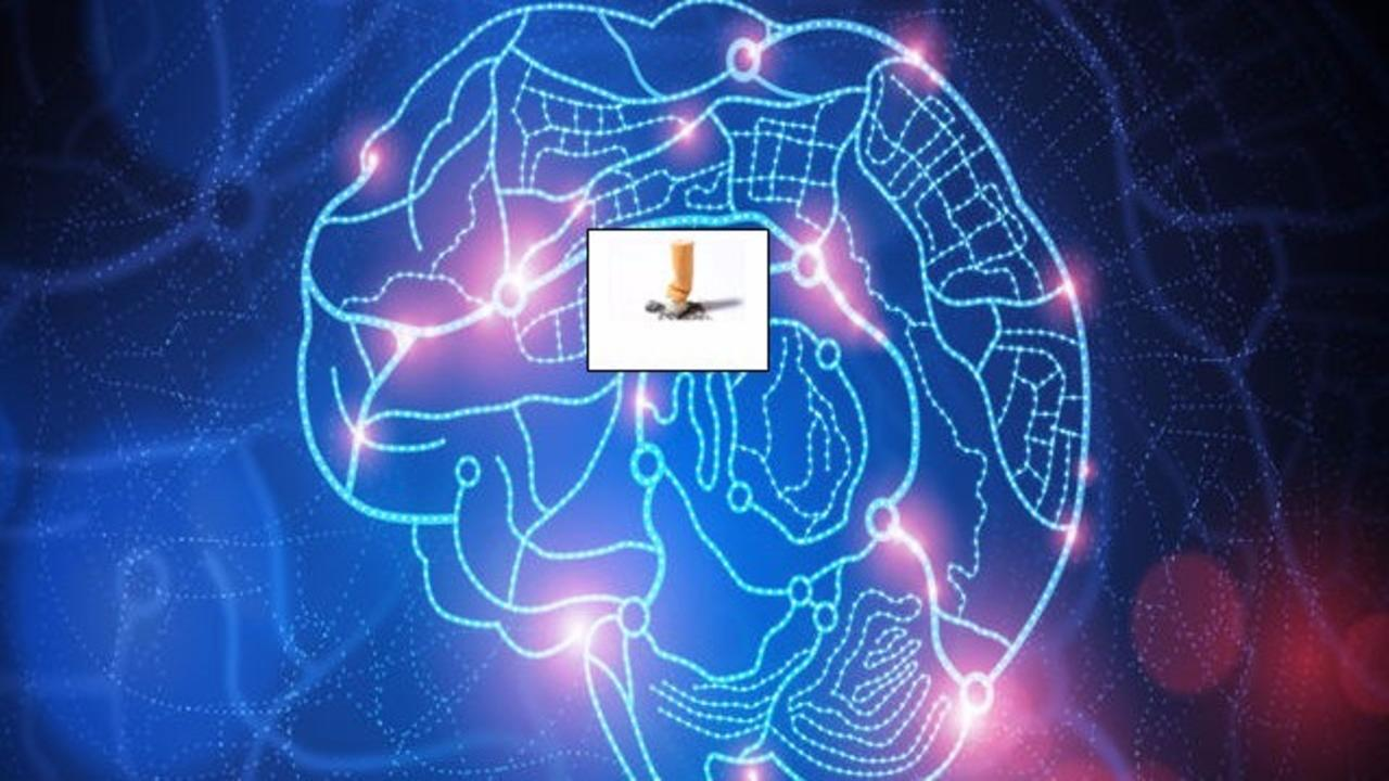 Atu6tyorre2cz5chl8q6 brain image 2