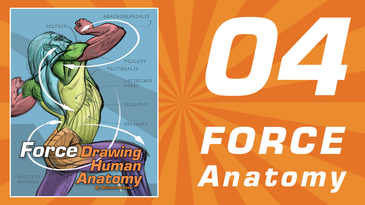 Anatomy Online Drawing Class - Bring Deeper Understanding To Your Work