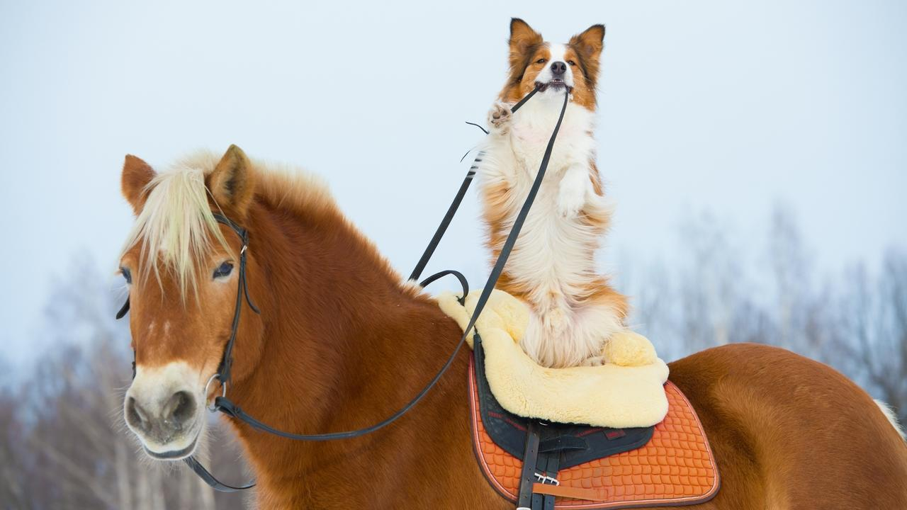 Jwdpcpriq4oe3eftunnb dog and horse