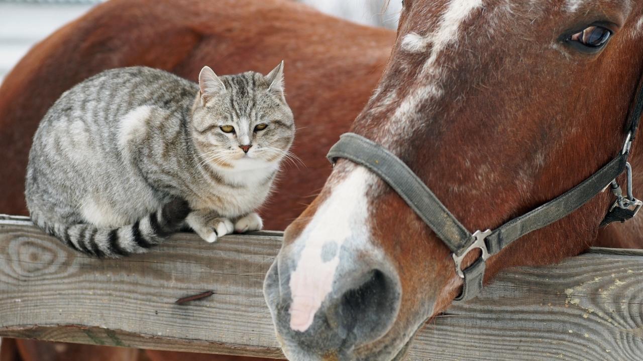 Tsugmyyntczcvwozndkr cat and horse