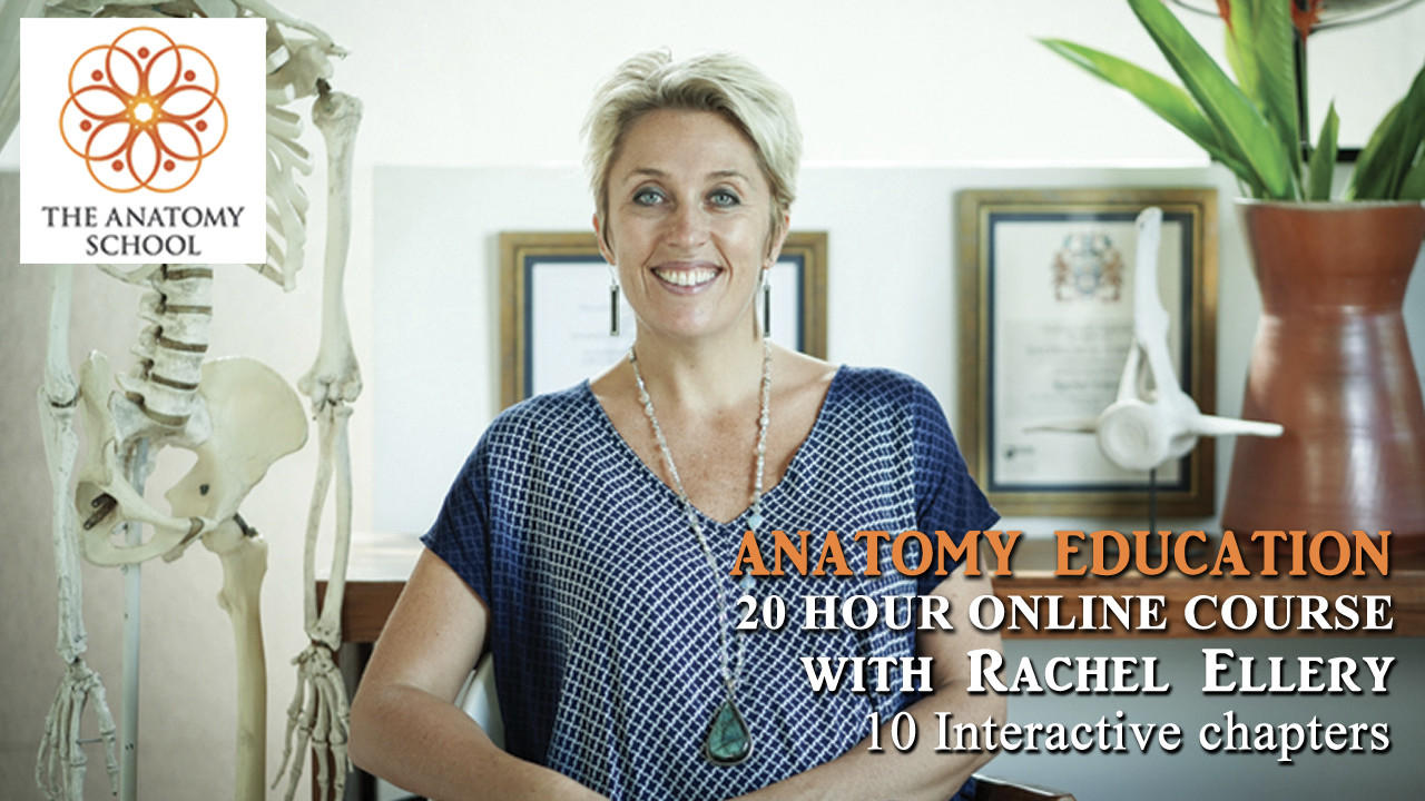 Wa1xxfdcty2lqxguh1ul anatomy education online course