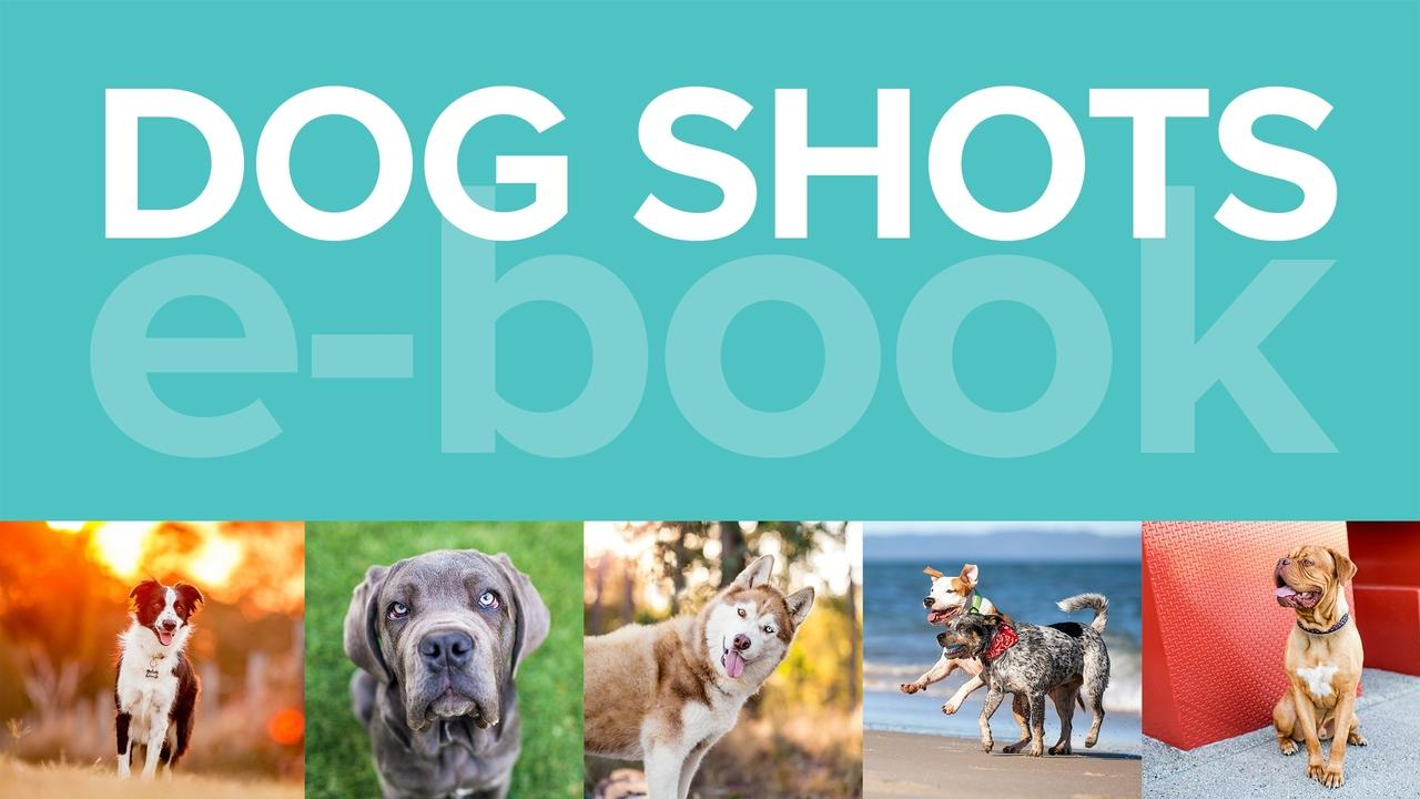 Rulg1griys7upgpvb7bq dog shots card