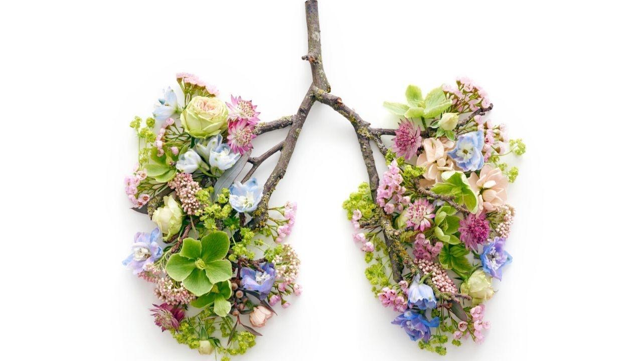 Amuzad9ssvsywchbpfot everyday lungs