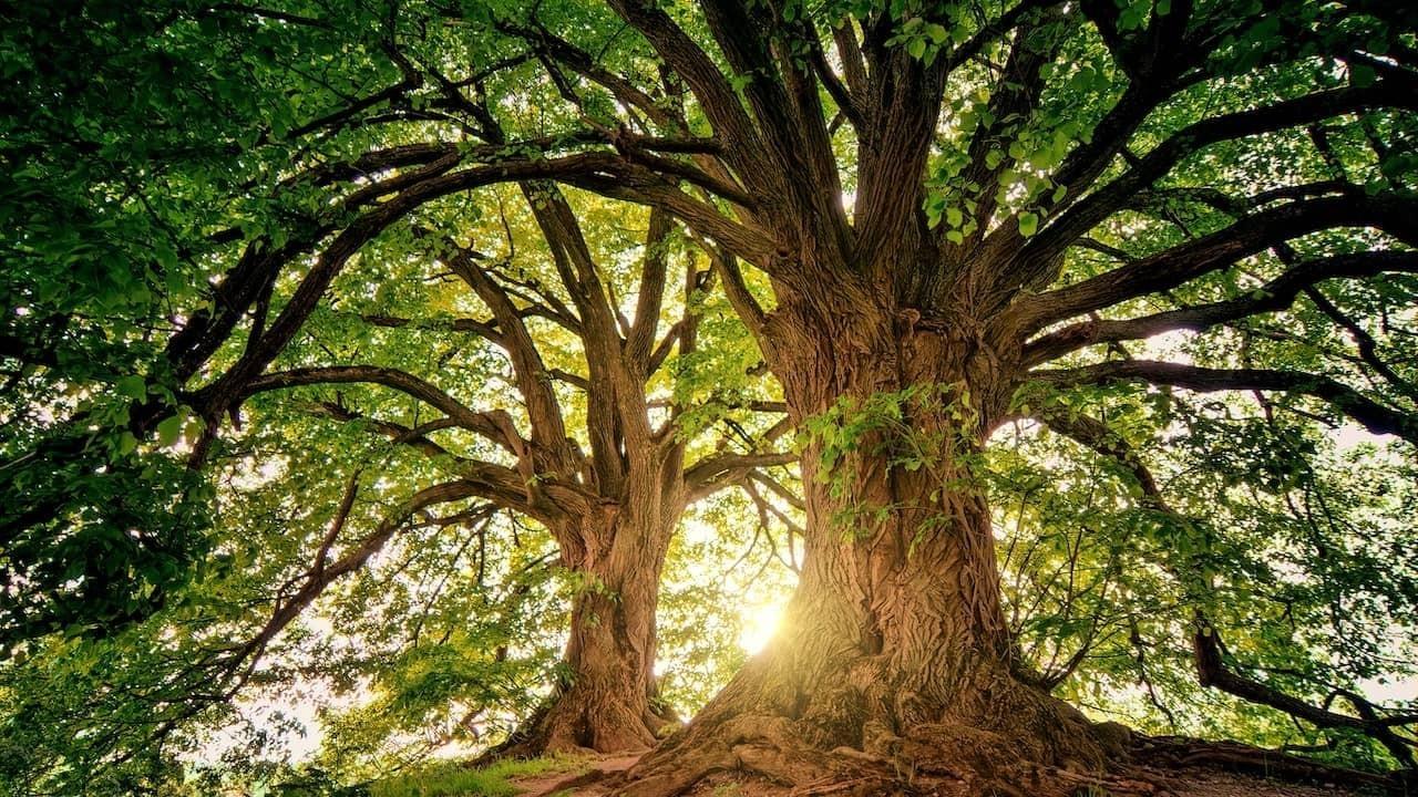 Myjgn9wcq5a3bbdfymil oak trees unsplash 1280x720 compressed