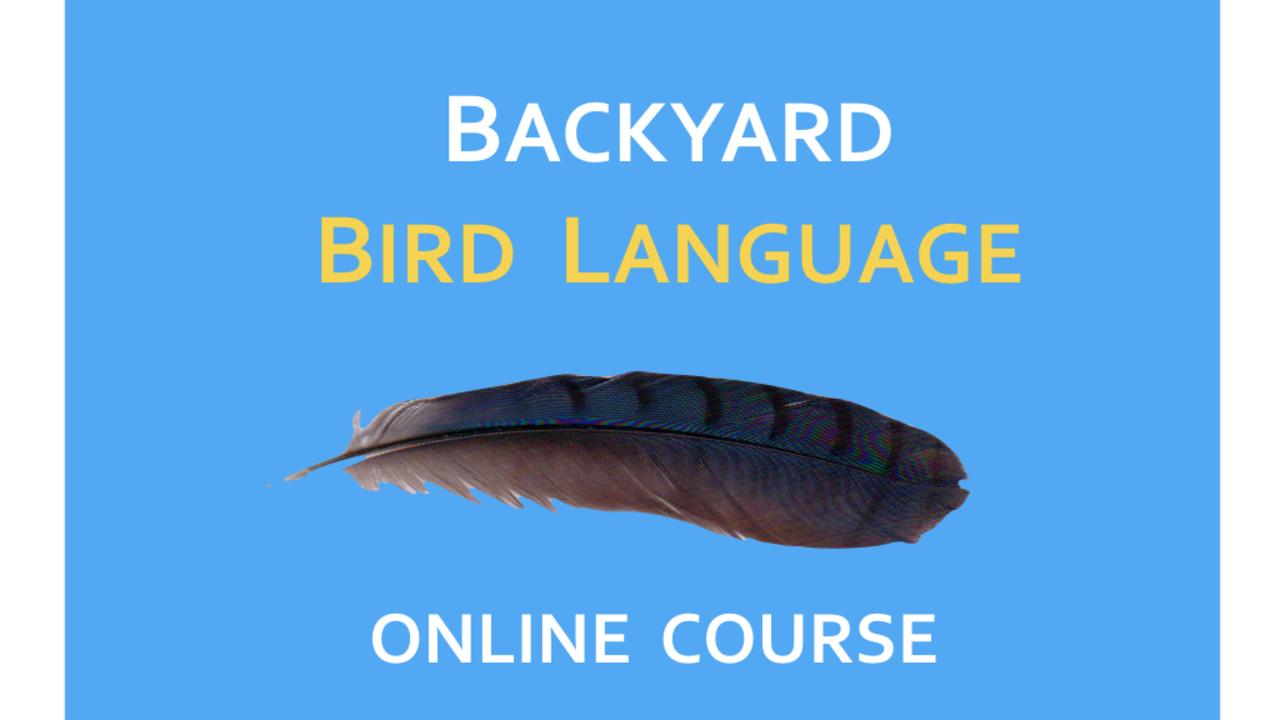 6xiq7cwntulaw3ry7rcq backyard bird language 2017 logo .001