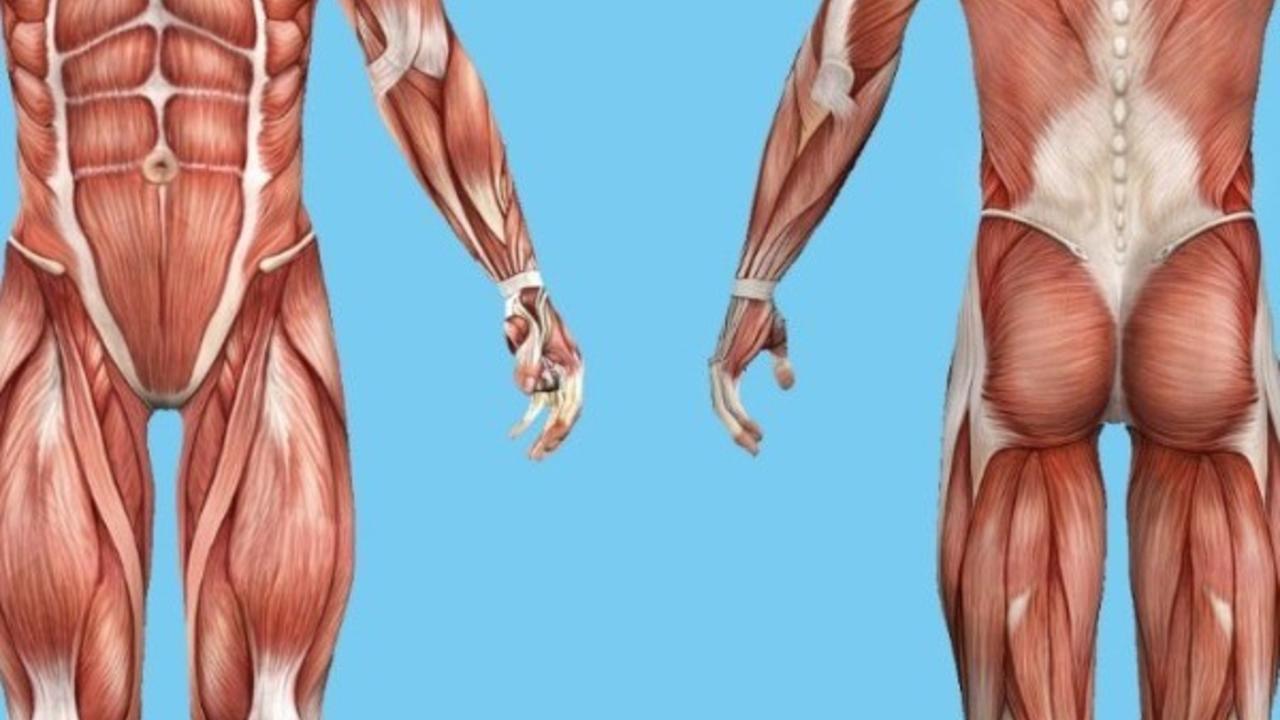 5i5shpxttocr9jseekwa faskia ja foamroller tekniikka anatomia fysiologia image