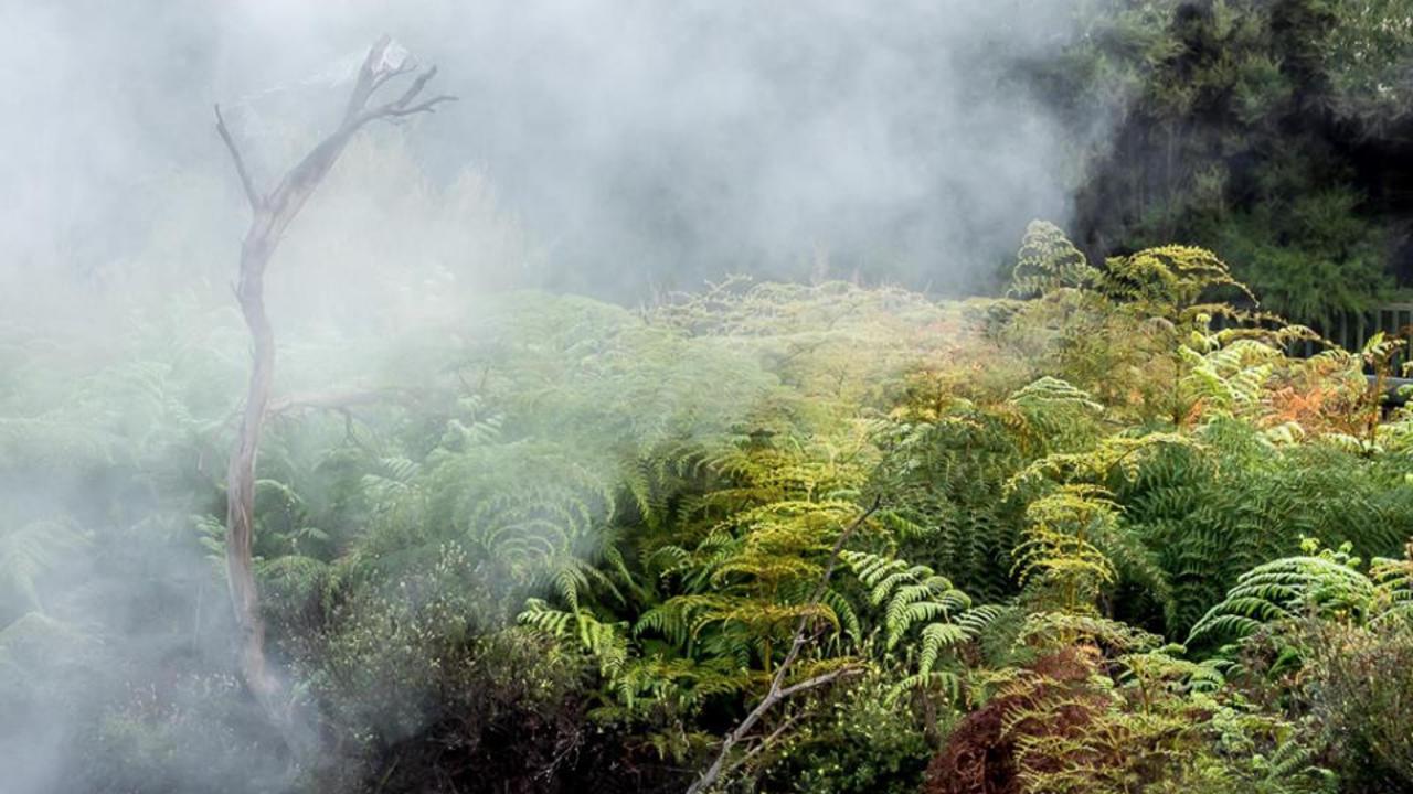 Ql12rvuwrsgsndrhlgso steam and ferns