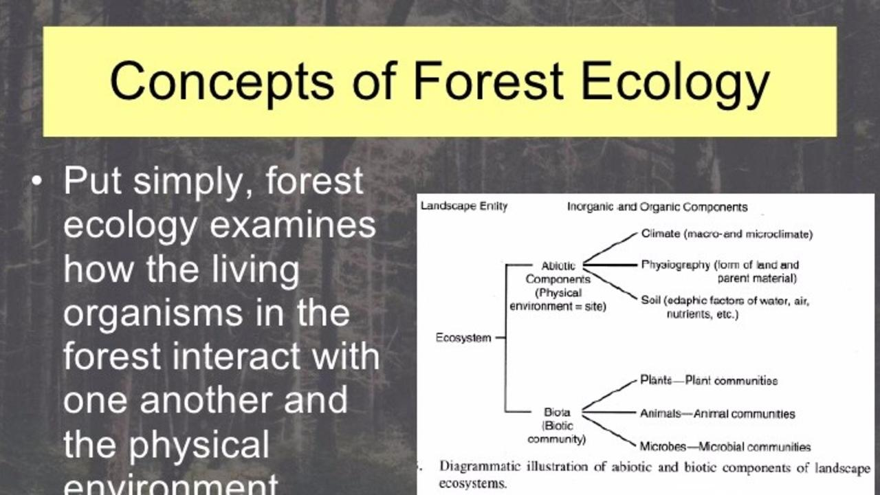 Sf4vepnhtaey0ioqr5yh intro to forest ecology