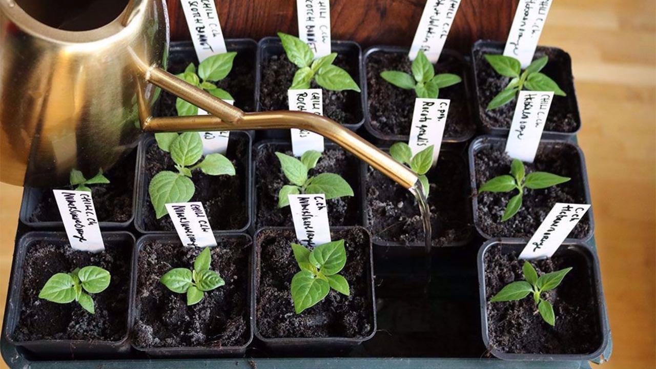 Xtyunv4qsriacjftmfpb odla hemma sa fro n till gro nsaker och blommor
