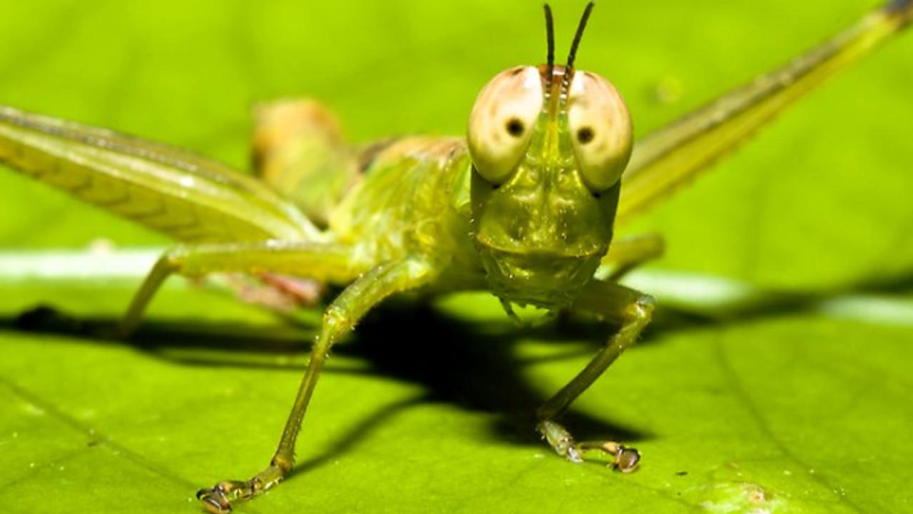 Wgyll6njr2wuftffclpq amazing insects post