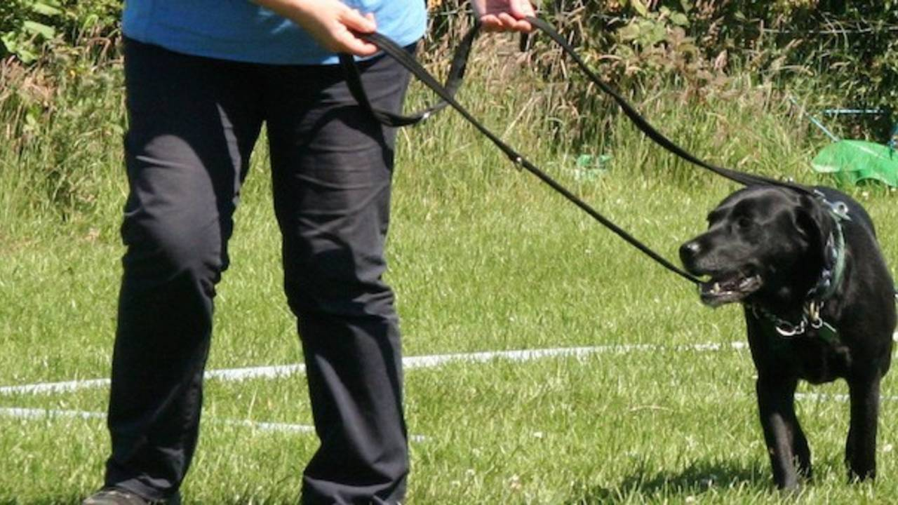 Six reasons a harness will stop your dog pulling