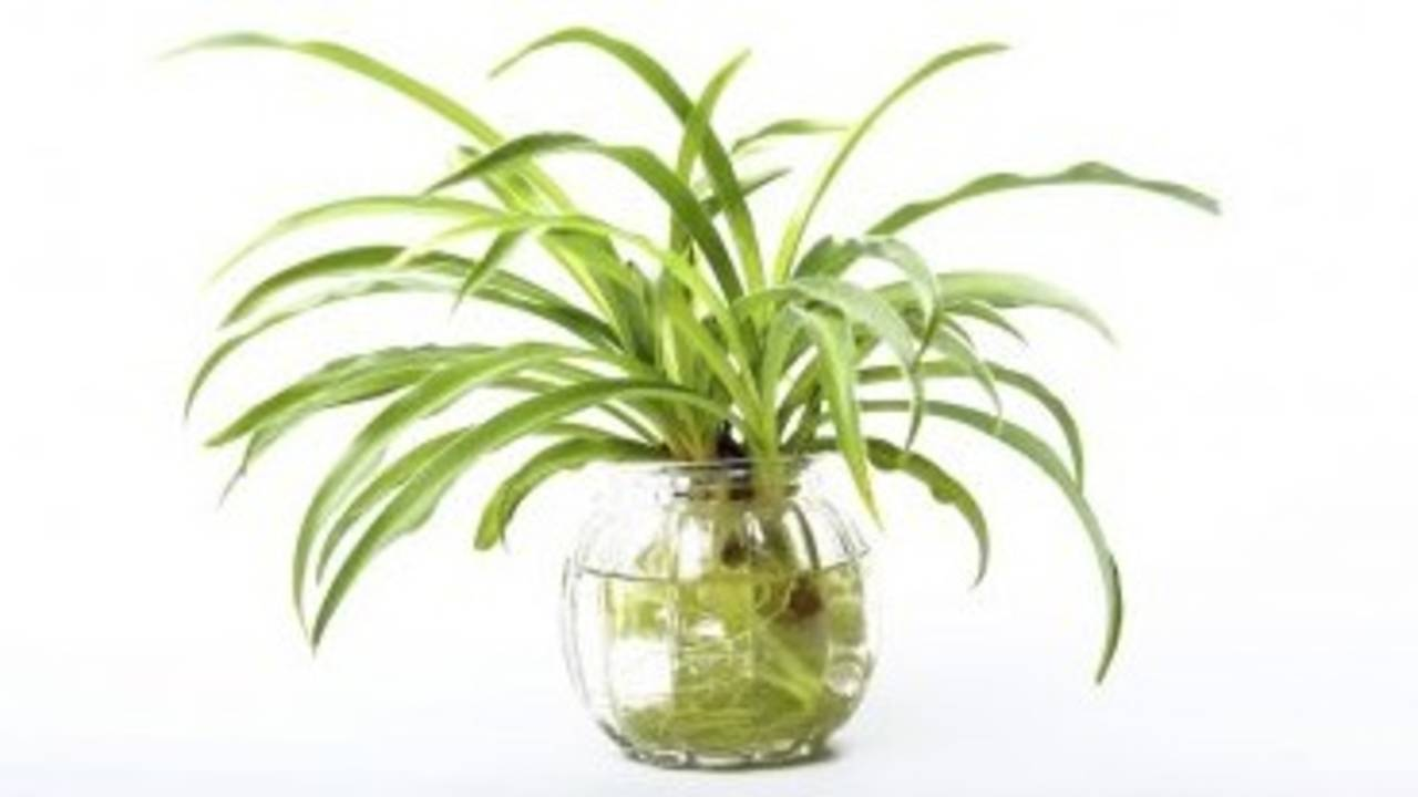 Detox Your Home: 5 Plants to Improve Indoor Air Quality