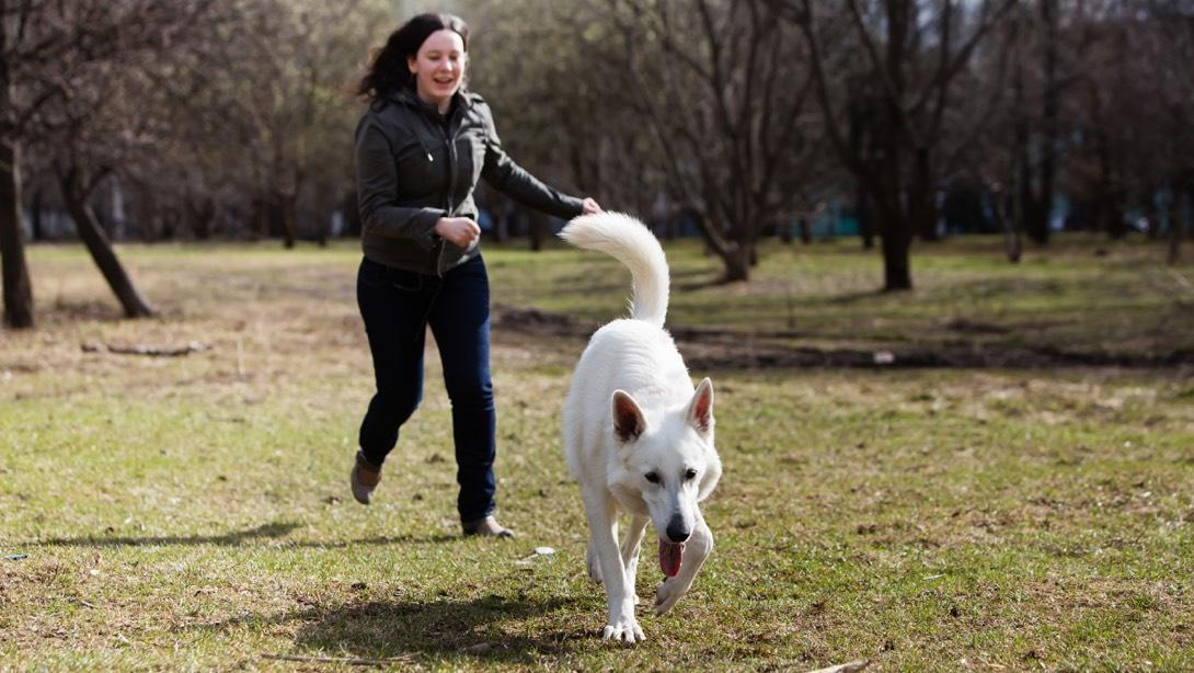 Training your adolescent dog