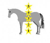 Horse Riders Mechanic having the perfect horse