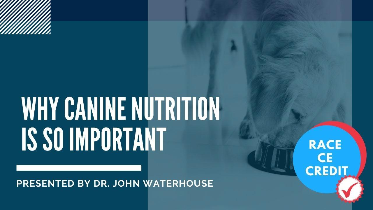 Why Canine Nutrition Is So Important