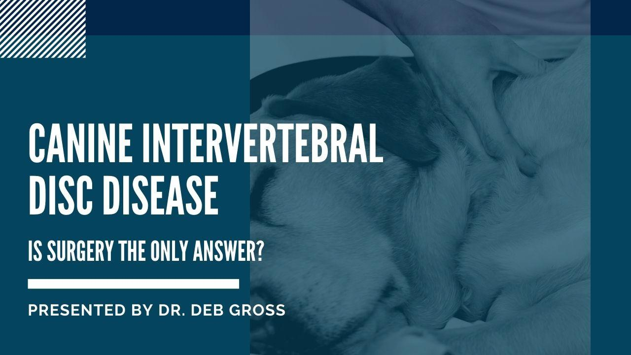 Canine Intervertebral Disc Disease