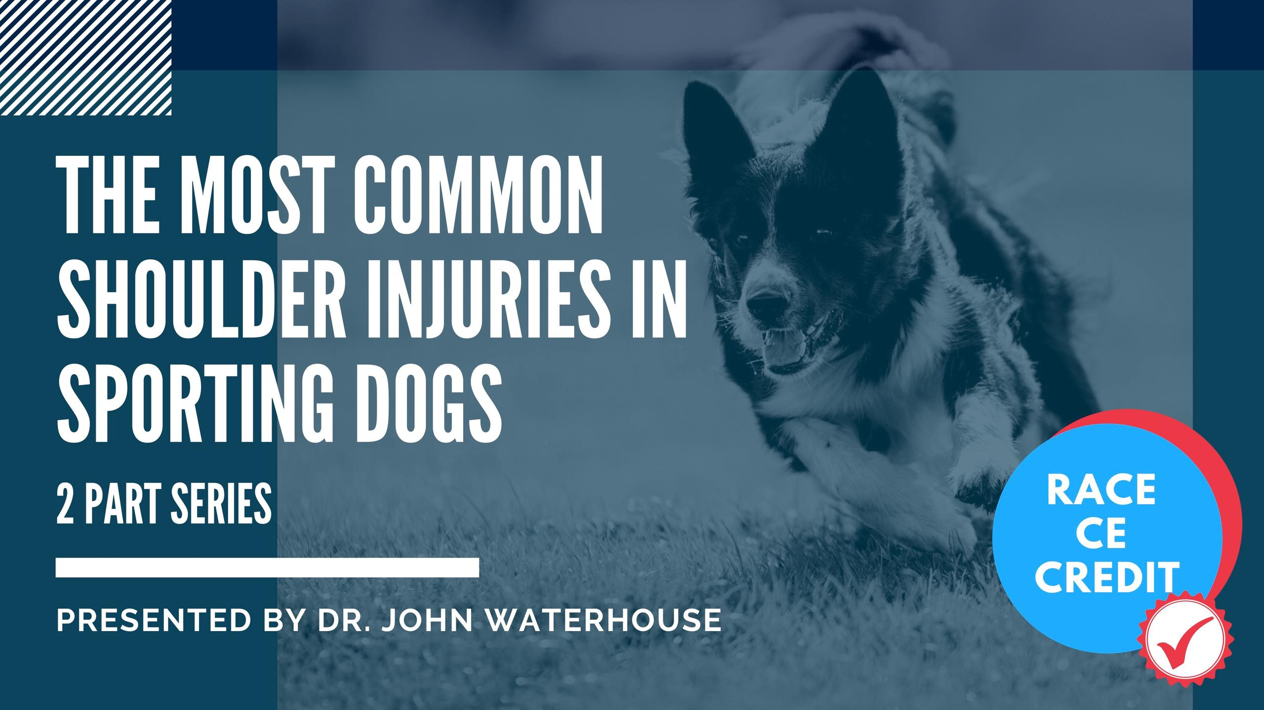 Most Common Sporting Injuries in Sporting Dogs