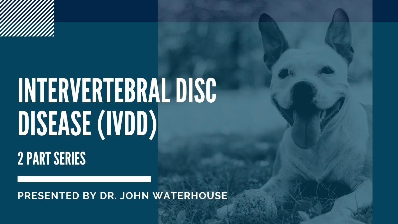Intervertebral Disc Disease (IVDD)