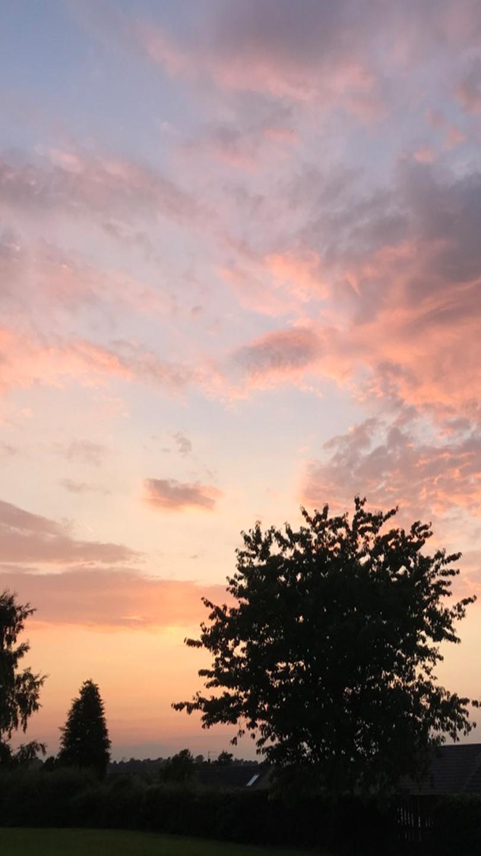 Winter sunset, pink sky